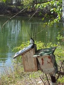 Birds of Riverbend Campground Okotoks