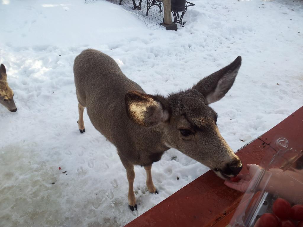 Deer, wildlife, winter